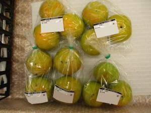 甘柿の「太秋」。